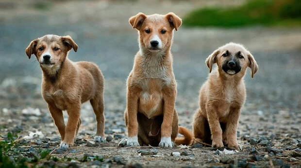 Чем старше собака, тем выше агрессия, – ученые