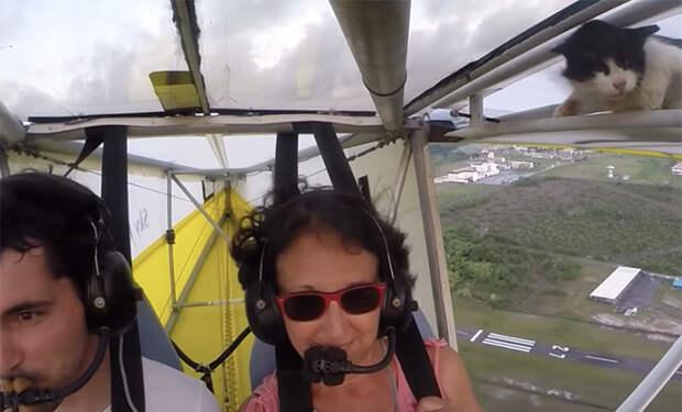 Инструктор взлетел на планере, а на высоте в сотни метров с крыла в кабину начал залезать кот