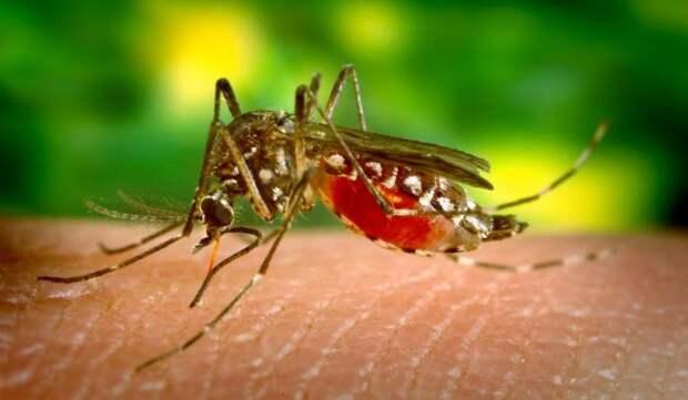 Малярия. болезни, вирусы, история, эпидемия