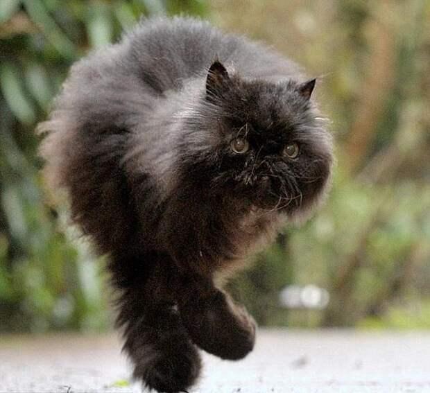 У этого кота всего две лапы, но даже сейчас он не жалеет себя!
