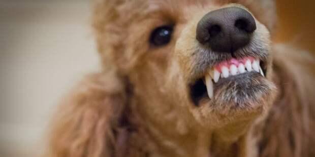 Ученые составили рейтинг самых агрессивных пород собак