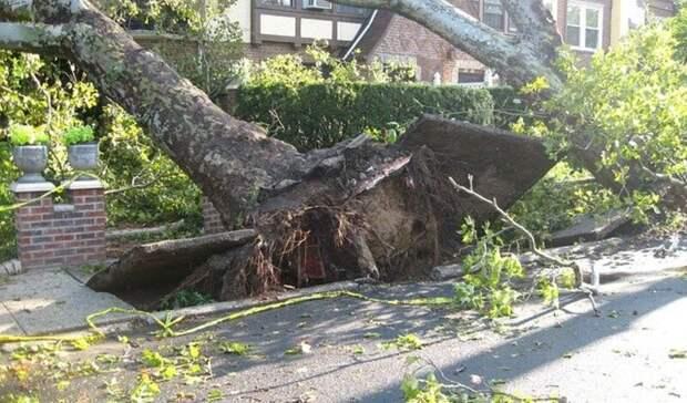 Ростовчан предупредили опадении деревьев из-за сильного ветра 25 и26мая