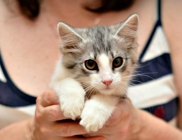 Максимка история, коты