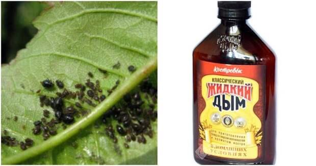 Жидкий дым для быстрого спасения растений от тли и муравьев