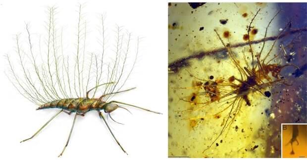 Личинка златоглазки  (лат. Chrysopidae)