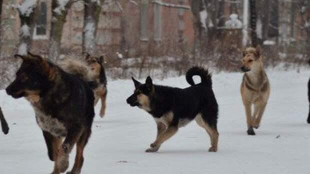 Власти городов России выступили за стерилизацию животных