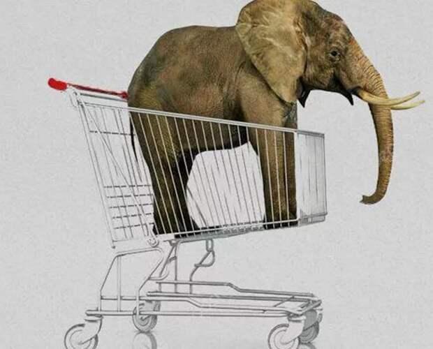 Америка торгует слонами