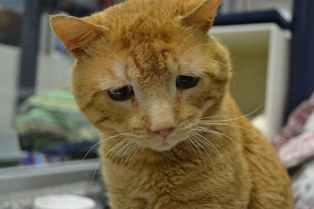 """""""Самый грустный кот в мире"""" стал немного счастливее после того, как его взяли из приюта"""