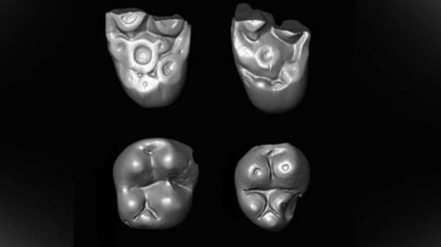 Обнаружены останки приматов, чьи предки переплыли Атлантику