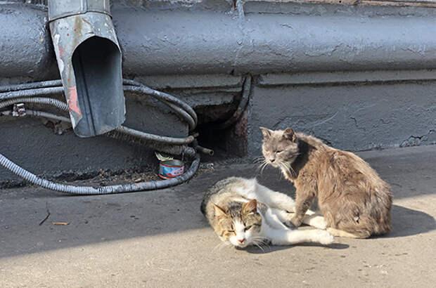 Путин поручил увеличить долю вакцинированных бездомных животных