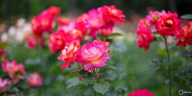 Во дворе в 3-м проезде Марьиной Рощи привели в порядок цветник – «Жилищник»