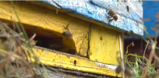 В новом выпуске  программы «Деревенское счастье» — о пчеловоде из Тополёвки