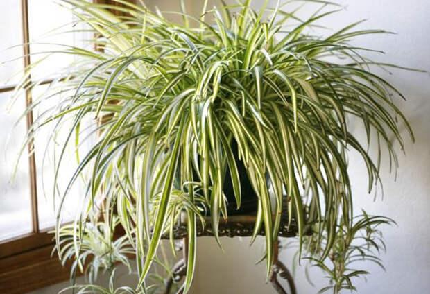 10 квартирных растений для очистки воздуха: дышится сразу лучше