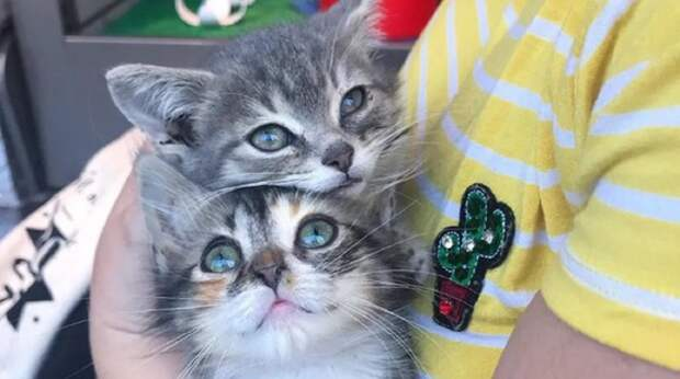 Найденные котята не расставались ни на миг. Слабенькие и больные, они чувствовали, что только так смогут выжить