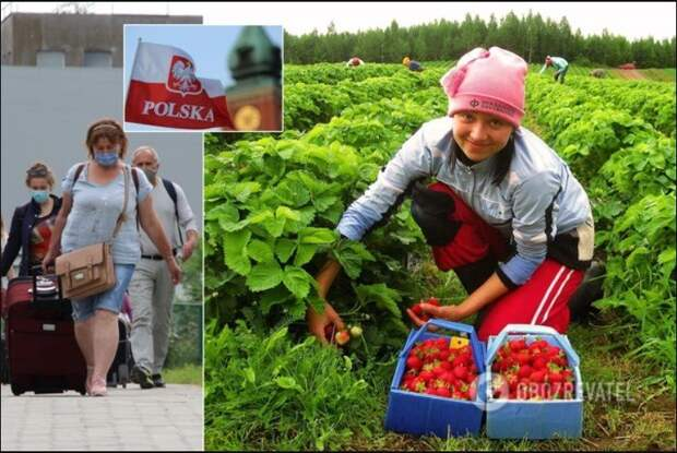 """""""Да вы нелюди! Индюки вы!"""": На Украине призвали обложить налогом переводы от трудовых мигрантов..."""