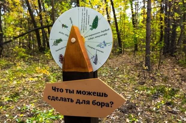В Челябинском городском бору пройдет субботник