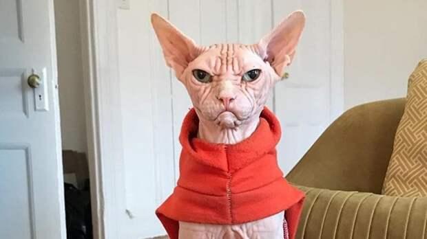 Самый злой в мире кот стал популярным в интернете