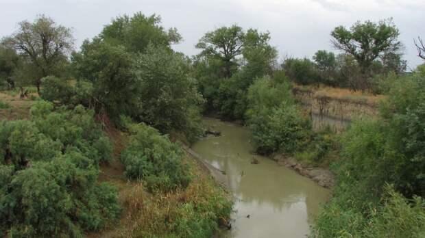 Режим охраны уникального пойменного леса усилили на Ставрополье