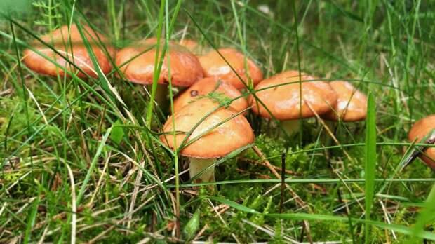 Диетолог Кадырова предостерегла от употребления первых весенних грибов