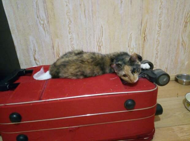 Кошечка, которая никогда не устанет дарить своё тепло и любовь!
