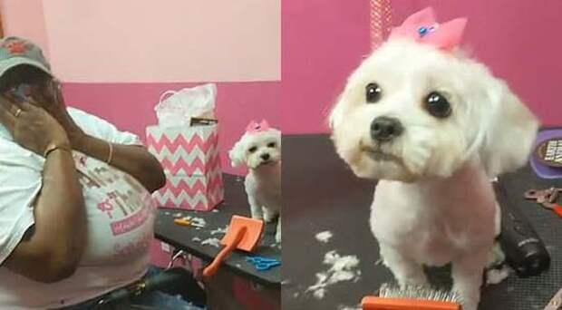 Очень эмоциональная реакция парикмахерши на подаренную собачку