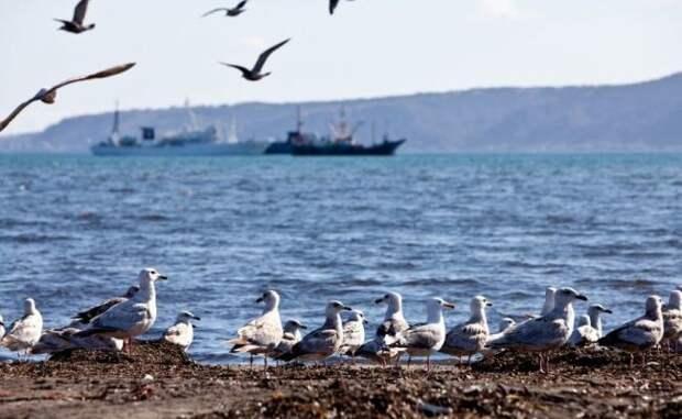 На Сахалине стартовал сезон ловли «нестандартной» рыбы
