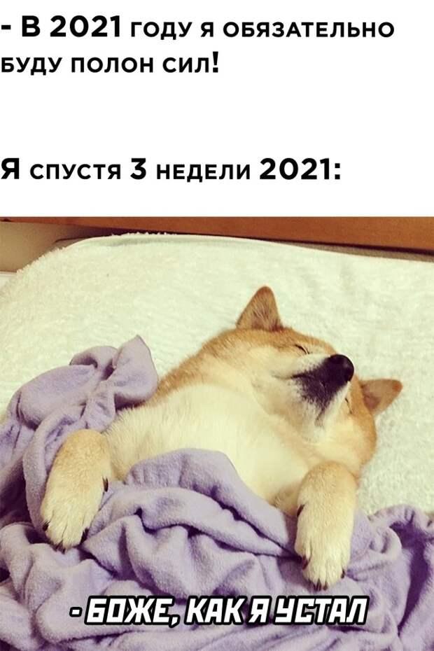 Смешные картинки вечер 21 января 2021