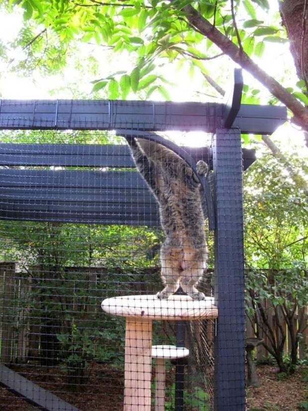 Семья выстроила для своих котов специальный вольер в саду