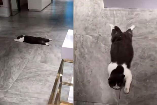 Отдых супергероя: «летящий» кот прилег подзарядиться и развеселил соцсети