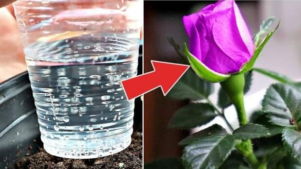 Минералка для домашних растений: обильное цветение обеспечено