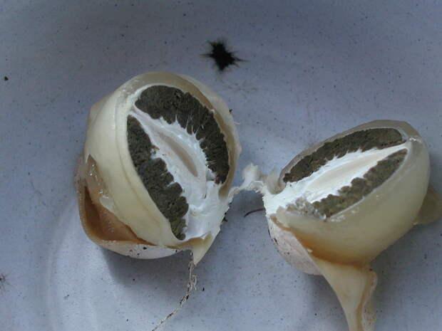Загадочный гриб — тайны летнего леса