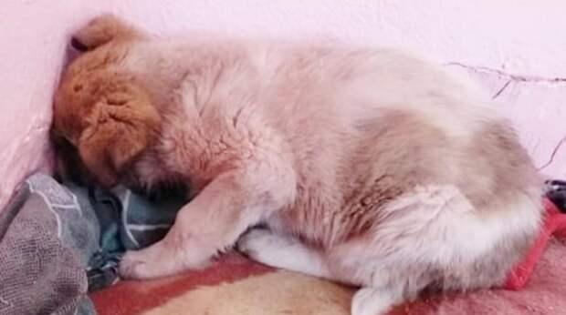 Осиротевший дикий щенок уткнулся мордочкой в стенку приюта и хотел, чтобы его просто оставили в покое