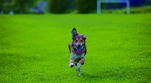 Im running free by David McKinlay on 500px.com