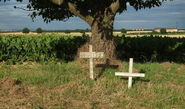 ВНовгородской области найдено массовое захоронение жертв германских нацистов