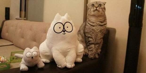 Смешные фото котиков для отличного настроения