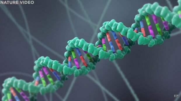 Видео: Возможно ли изменить гены человека
