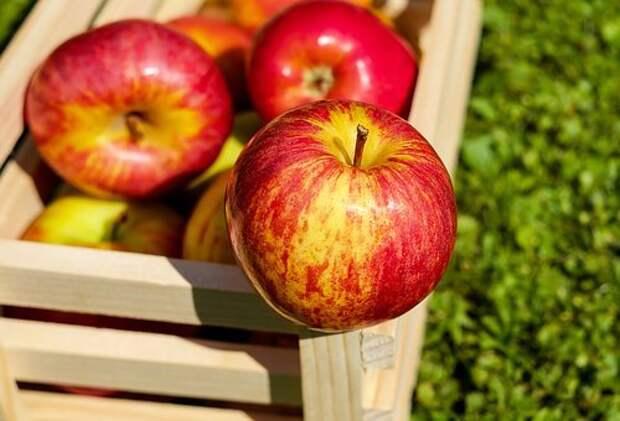 Яблоко, Красный, Фрукты, Свежий