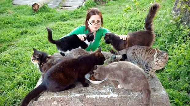 Валаамские кошки
