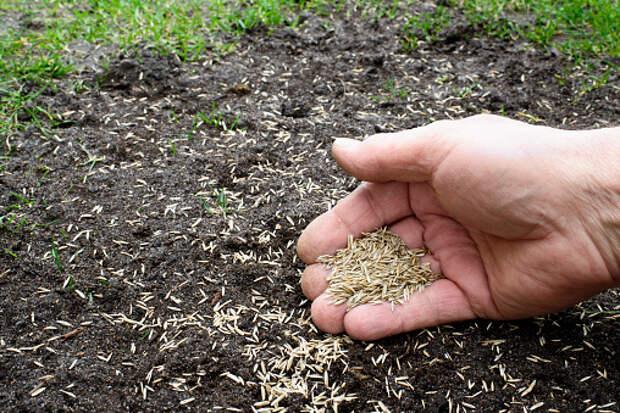 На Академика Комарова восстановили газон