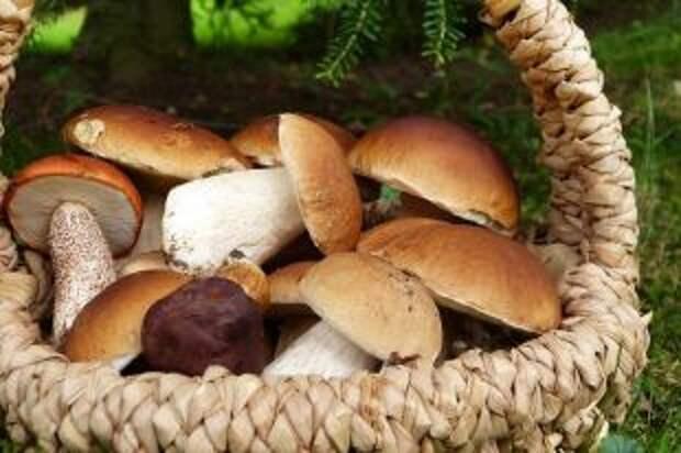 Опасны ли червивые грибы?