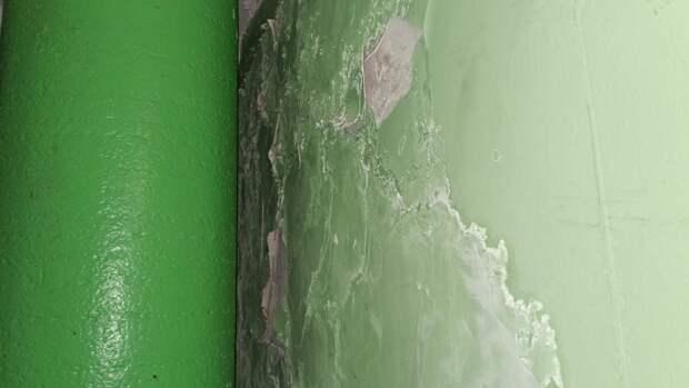 Инженер-биолог Дьяков предупредил о смертельной опасности плесени на стенах
