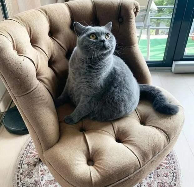 Хозяин попросил усыпить кота, похожего на шар