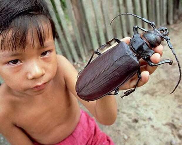 8 фото огромных животных, которые обычно маленькие