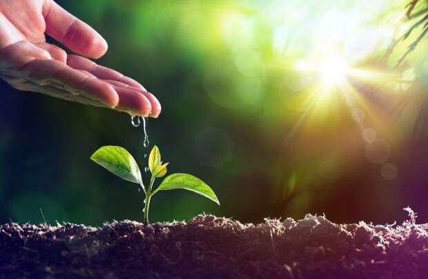 Дачникам позволили больше не согласовывать с властями посев импортных семян