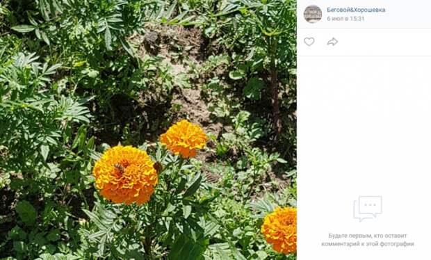 В Чапаевском парке активизировались пчелы