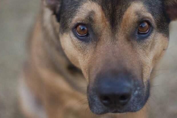 Как именно собаки понимают речь?