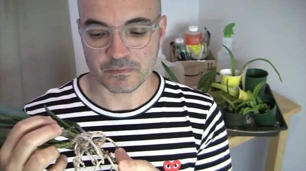 Лайфхак, как помочь орхидее нарастить корни, о котором мало кто знает