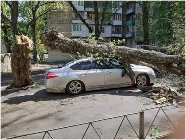 В Донецке дерево упало на автомобиль