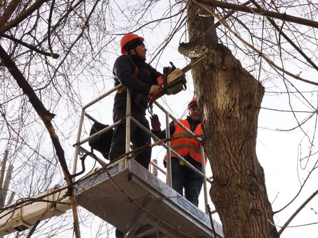 Аварийное дерево на улице Свободы удалено — Жилищник