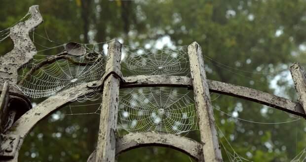 Как паук может спасти жизнь человека?
